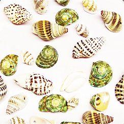 30 spitze Muschelperlen Mix 15 - 35 mm grün beige